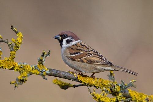 野生の雀에 대한 이미지 검색결과