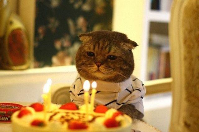 「一人の誕生日」の画像検索結果