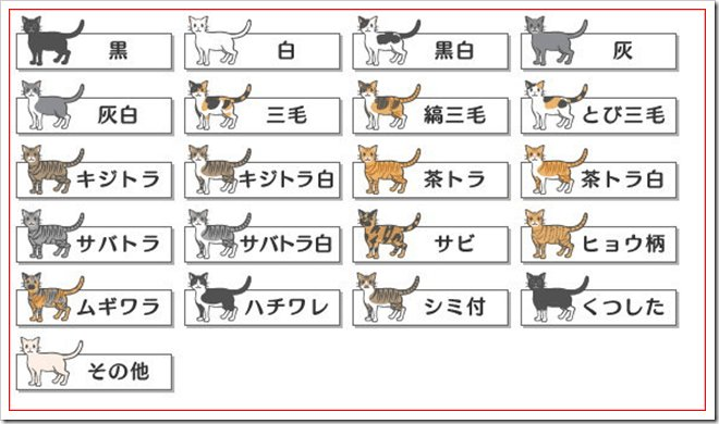 image 20.png?resize=300,169 - 靴下猫のソックスはなぜ白い?他の色はないの?