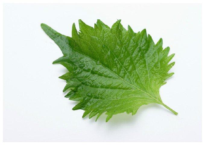 img 5a584f43ea85a - 香りが活きる!大葉を使った簡単レシピ