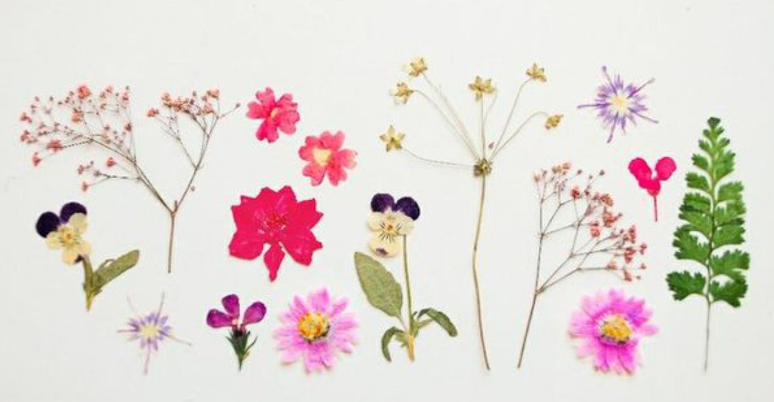 img 5a5872104084c - 未経験者でも超簡単に作れる!バラなどの押し花の作り方5選!