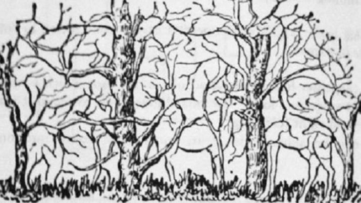 img 5a5c3a311b5e4 - 【Quiz】 画像の中にある「動物」は全部で何匹?