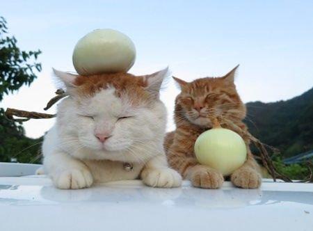 img 5a699ba2ad109.png?resize=1200,630 - 猫には絶対NG!玉ねぎは中毒症状を引き起こす