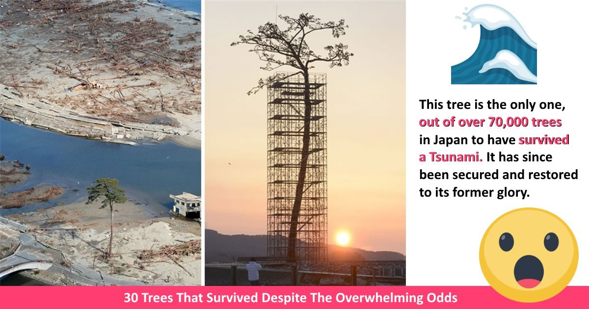 inspirationtrees - 30 Trees That Survived Despite The Overwhelming Odds