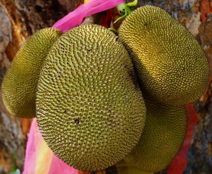 jackfruit3