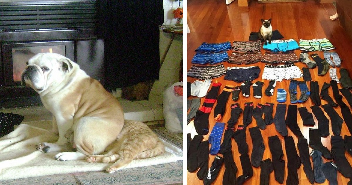 jerks11 1.jpg?resize=1200,630 - People Shared Funny Pictures Of Their Pets