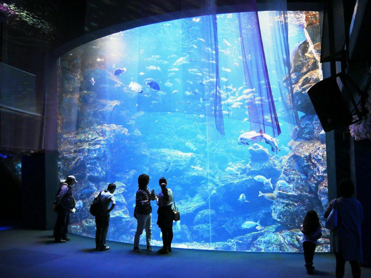 京都水族館에 대한 이미지 검색결과