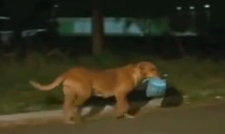 lilica 2 1.png?resize=300,169 - Abandoned Dog Travels Every Night To Feed Her Friends