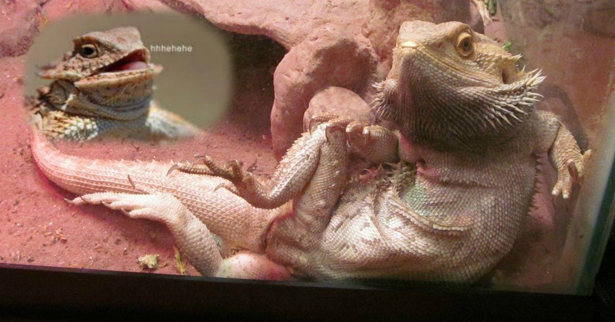 lizarddddddddd.jpg?resize=300,169 - Parents Receive Hilarious News After Taking Their Son's Sick Lizard To The Vet: 'Hey Son.. Lizard J**K Off Too...'