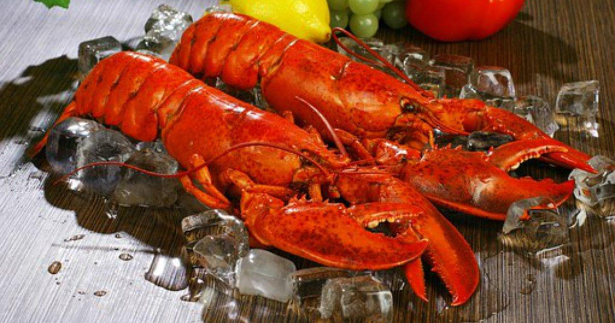 lobsters 1527602  340 - 스위스에서는 '바닷가재' 산 채로 끓는 물에 넣으면 '처벌'받는다