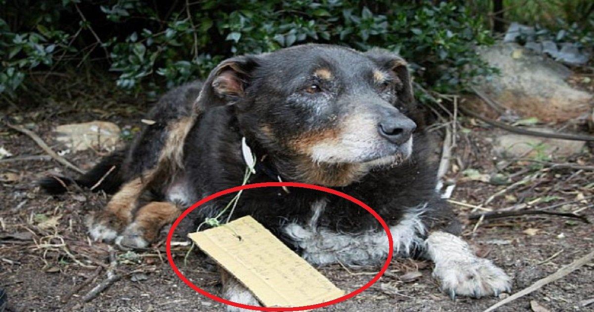 louie 1.jpg?resize=648,365 - Este perro desaparece durante varias horas y regresa con una curiosa nota alrededor del cuello