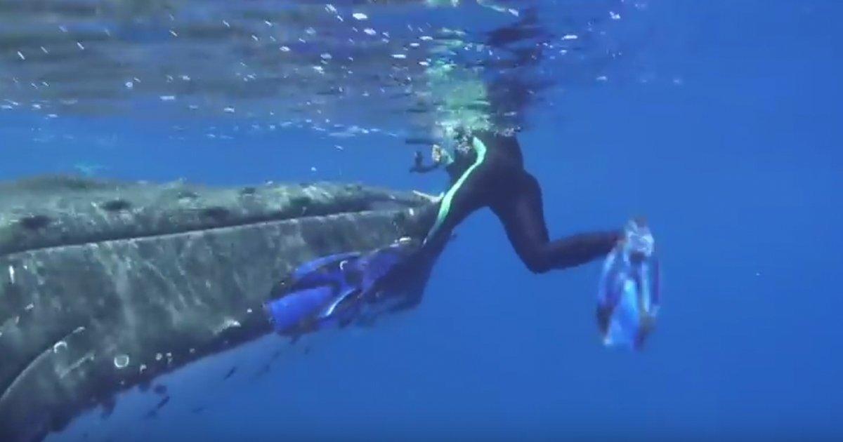 mainphoto baleine - [VIDEO] Une baleine prévient un plongeur d'une attaque imminente de requin!