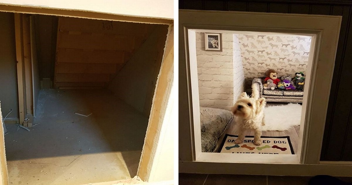 molly3 1.jpg?resize=1200,630 - Homem cria um quarto especial para seu cachorro debaixo da escada depois de descobrir que terá um bebê