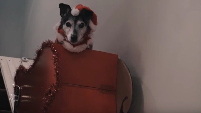 "motorized stairlift for dog stream img - Old Dog Breaks Leg, Owner Invents ""Motorized Stairlift"" for Christmas"
