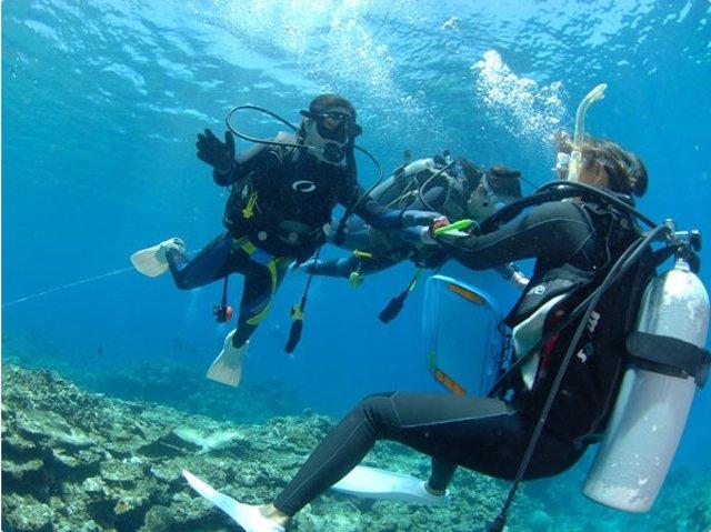 「ダイビング ルール」の画像検索結果