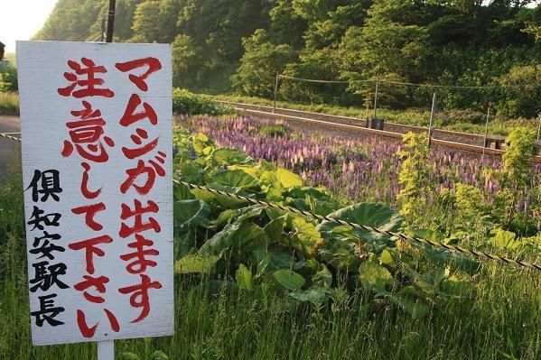 o0599039910607114691 - 見つけたら要注意!日本に生息する毒蛇