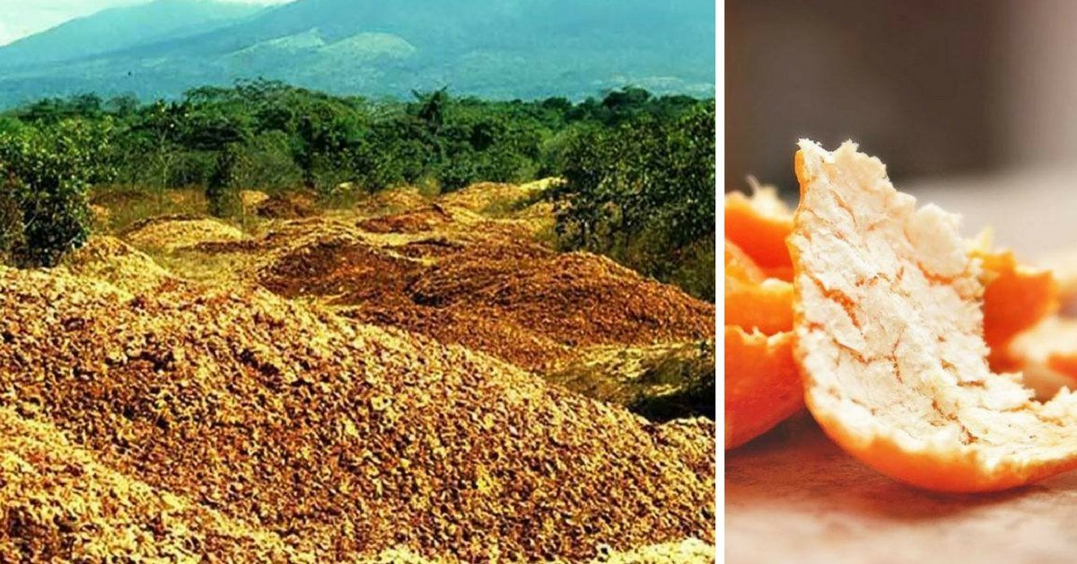 orange5 - After Dumping Orange Peels in a Deforested Area by a Juice Company, Researchers Can't Believe Their Eyes Years Later