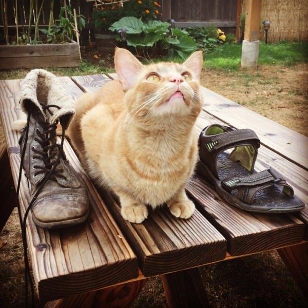 snorri cat에 대한 이미지 검색결과