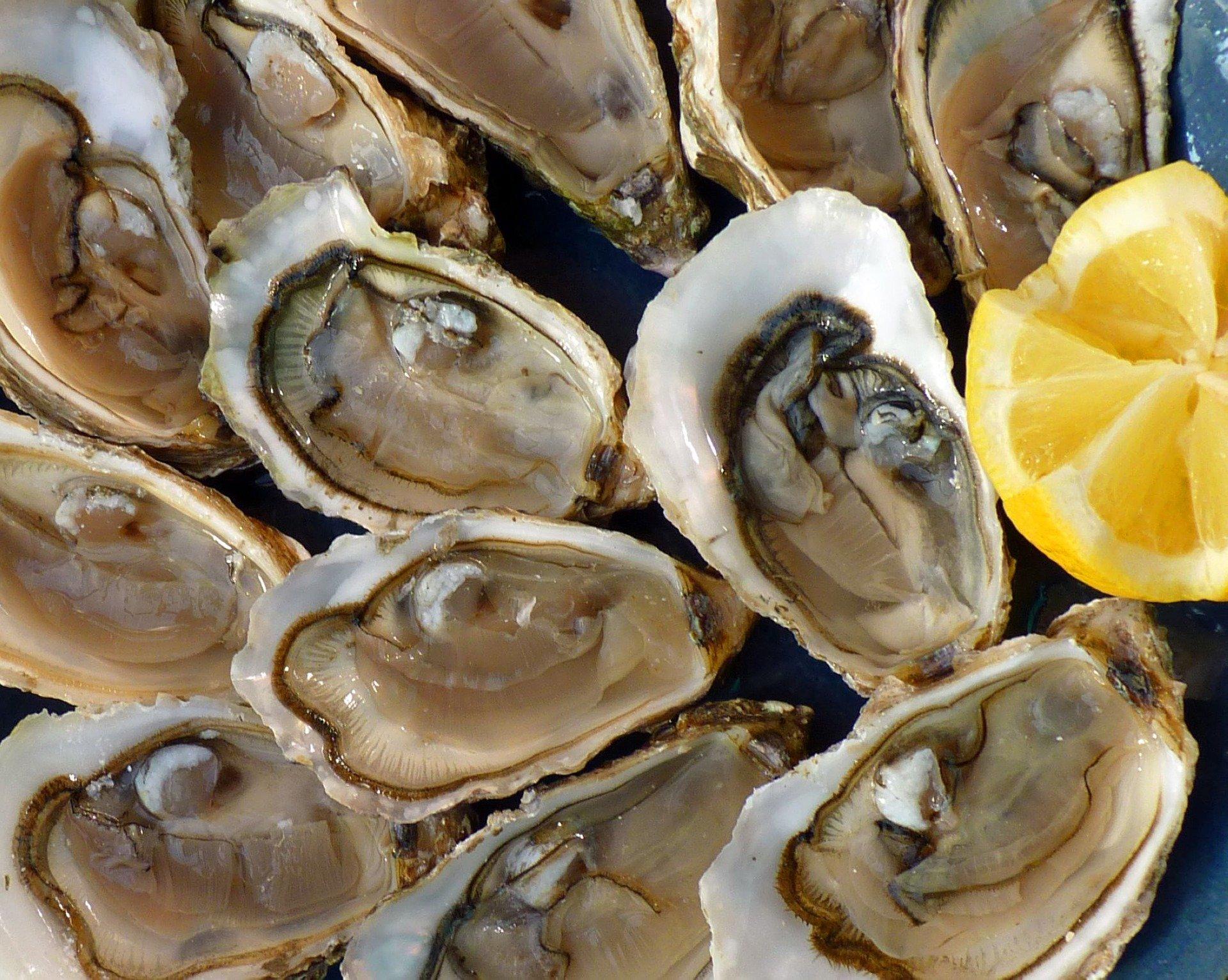oysters 1958668 1920 1024x817 - '겨울 별미' 굴 먹으면 노로바이러스 걸리는 '충격적' 이유