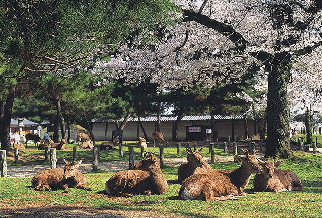 奈良公園에 대한 이미지 검색결과