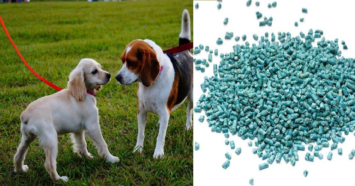 ratpoison4 1.jpg?resize=300,169 - Alguém está colocando veneno de rato escondido em pães e deixando-os como isca em parques de cachorros