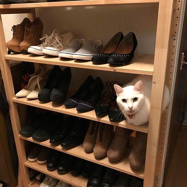 靴箱,diy에 대한 이미지 검색결과