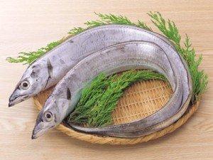 太刀魚에 대한 이미지 검색결과