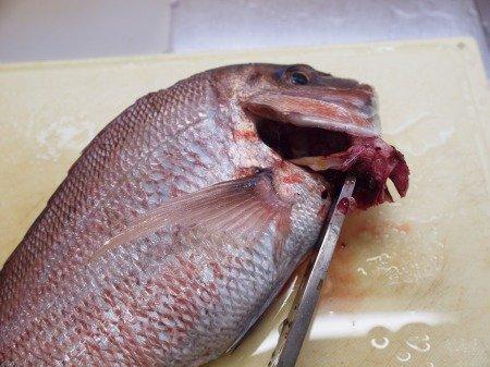 鯛 エラ取り에 대한 이미지 검색결과