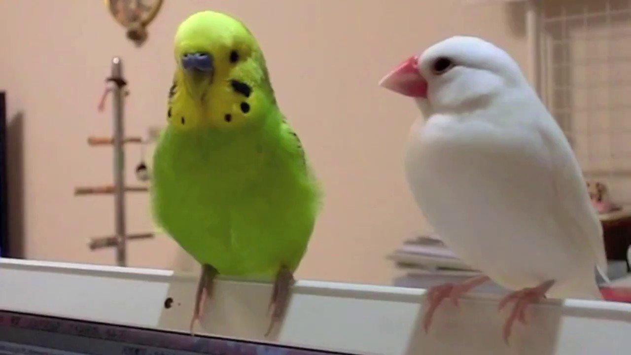 文鳥에 대한 이미지 검색결과