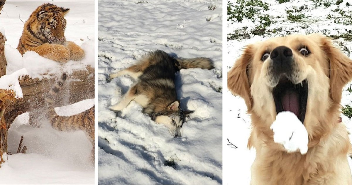 snow14 2.jpg?resize=300,169 - Top 20 Times Captured, When Animals Were Overjoyed To Experience Snow For The First Time
