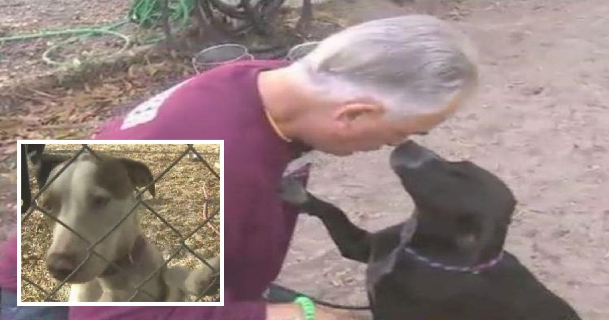 snuggler2 1 - Man Volunteers To Snuggle With Recovering Dogs In Memory Of His Dead Son