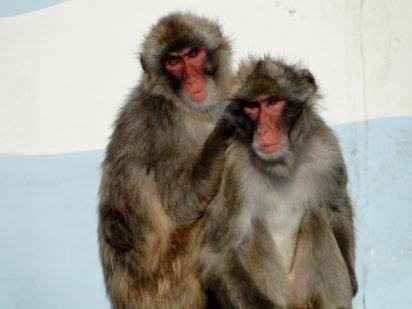 四柱推命 十二支 サル에 대한 이미지 검색결과