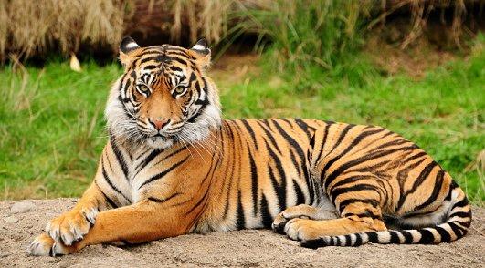 トラ에 대한 이미지 검색결과