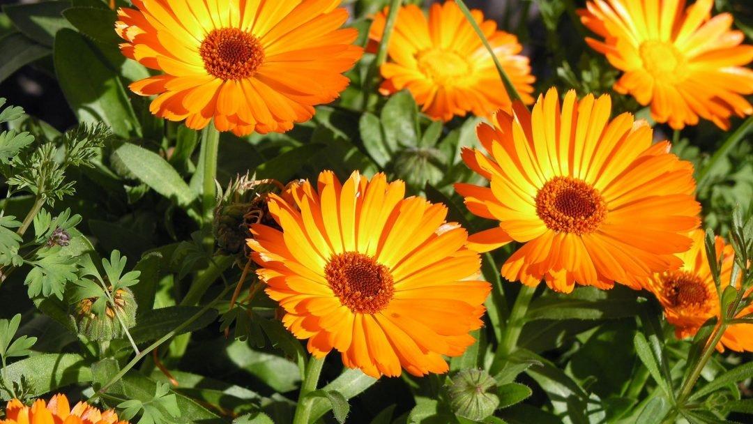 summer-flower-screensavers-1080x608