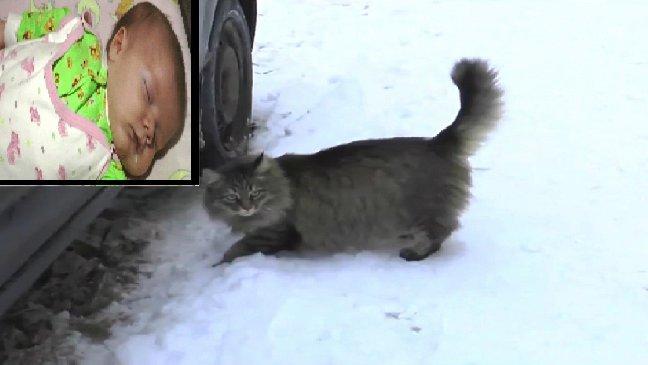 thumb nail baby freeeeeze - Un chat sauve la vie d'un bébé abandonné dans l'hiver glacial russe