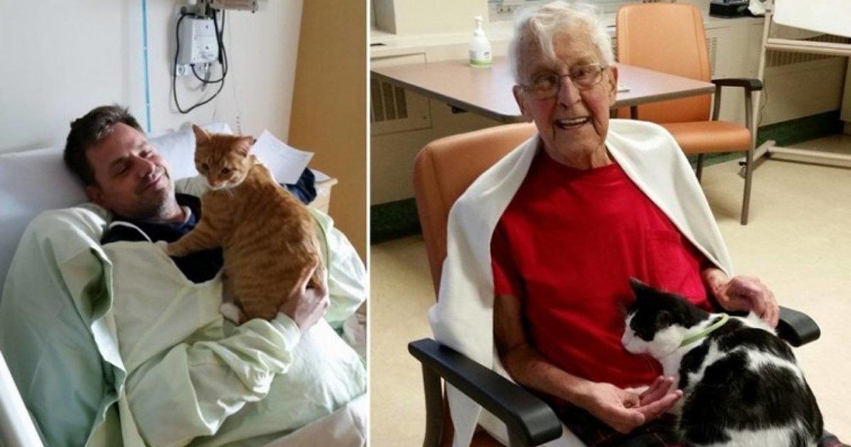 thumbnail5dd.png?resize=1200,630 - Hospital abre as portas para que animais de estimação visitem seus donos doentes