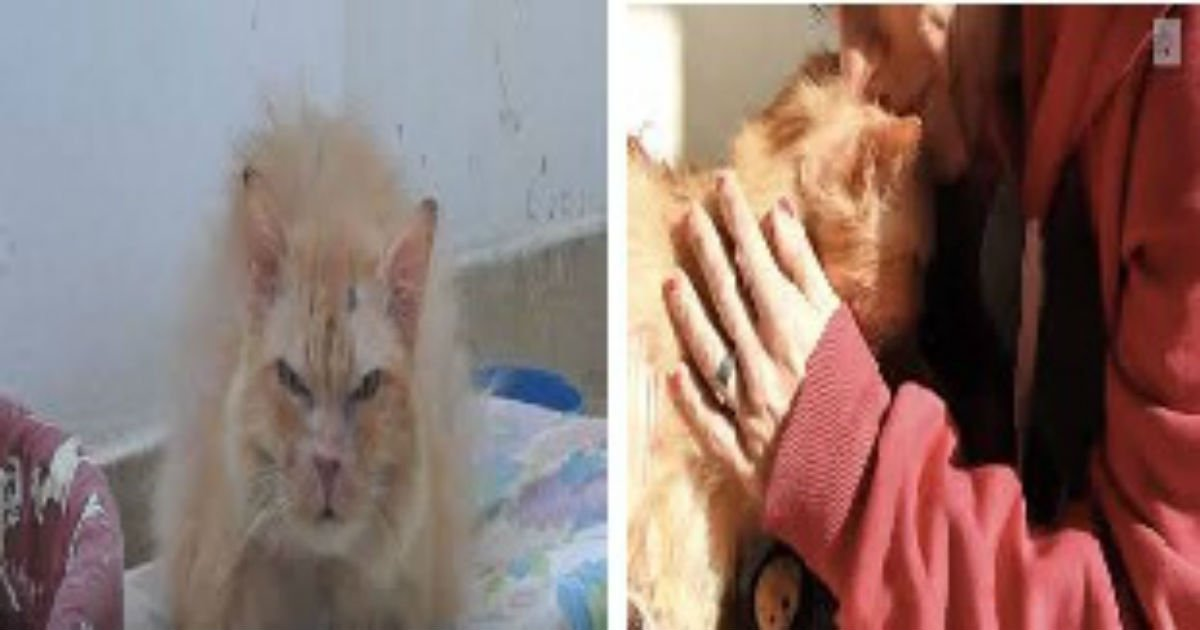 thumbnailfinal - Mistreated 17-year-old Cat Hates Humans Until Volunteer Refused To Give Up On Her