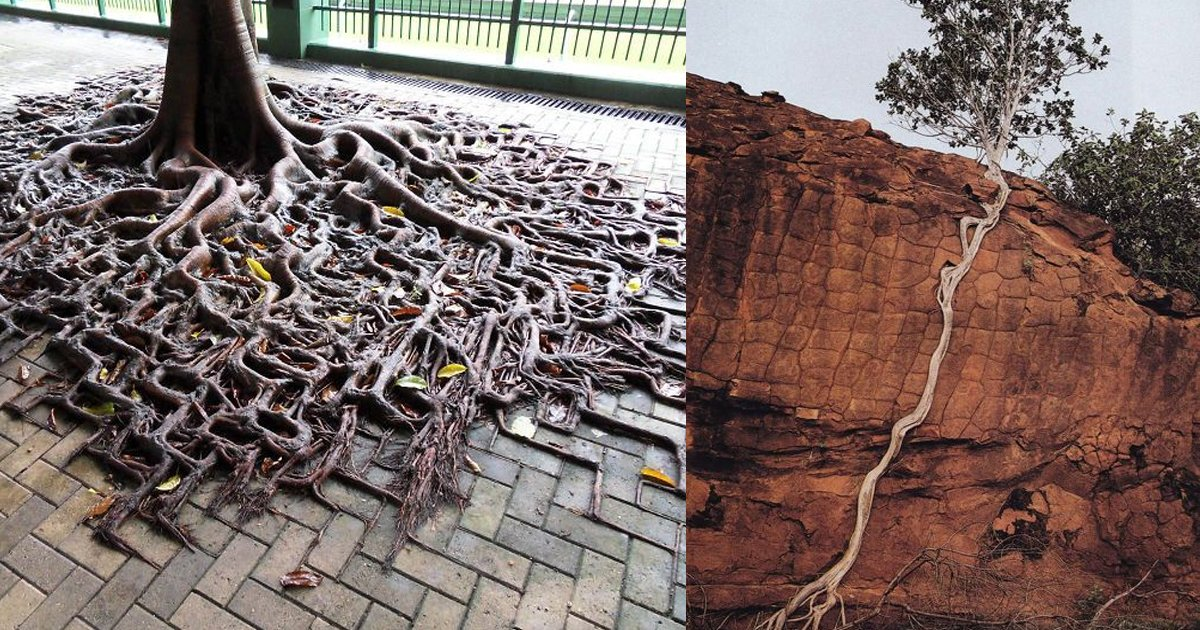 tree ttl 1.jpg?resize=1200,630 - 【凄い】木の生命力が凄すぎて恐ろしい!
