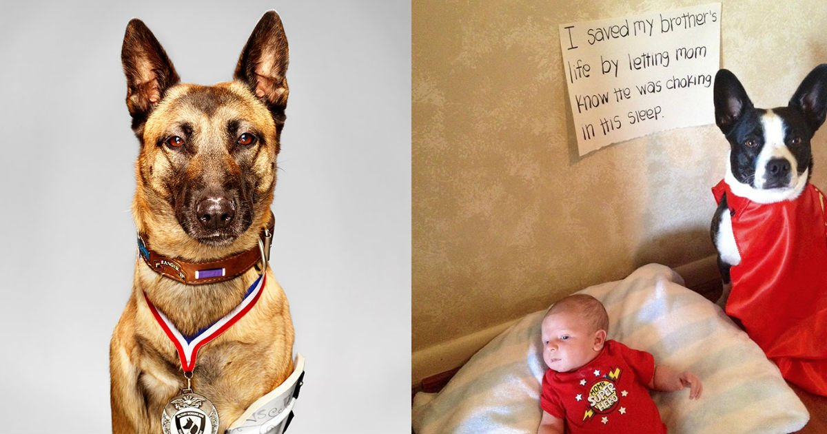 untitled 6 - Heroes In Disguise―Hero Dogs Save Innumerable Lives
