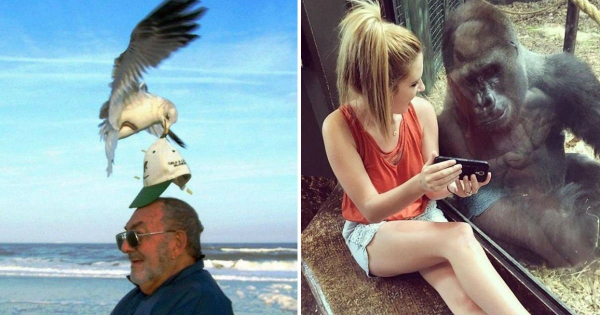 untitled 9 - These Perfectly Timed Photos Taken By Amateurs Will Make Your Day!