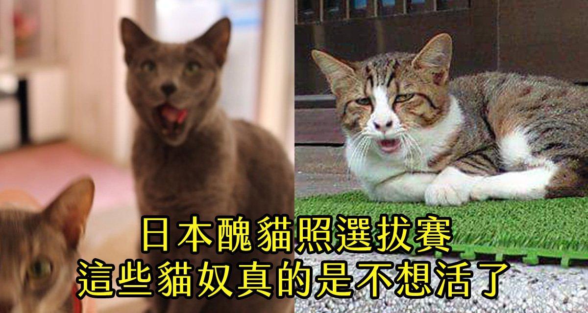 180226 117.jpg?resize=1200,630 - 醜貓照選拔賽:這些大膽貓奴!竟然敢把愛貓拍成這德性.....