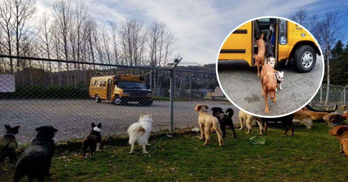 1ec8db8eb84ac 11.jpg?resize=1200,630 - Canadá cria creche para cachorros com direito a ônibus escolar que pega os peludinhos em casa!