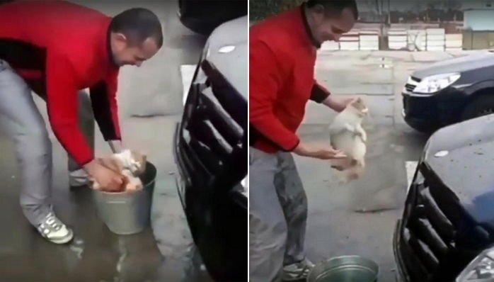 3 71 - '새끼 고양이'를 차량 청소용 스펀지로 사용한 남성 (영상)