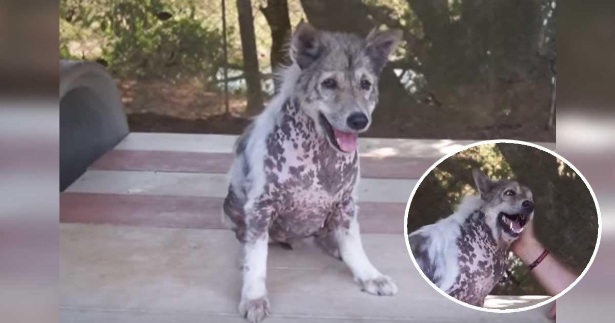 4ec8db8eb84ac 4.jpg?resize=1200,630 - Quando esse cãozinho descobriu que seria adotado, não aguentou de felicidade e até fez uma dancinha!