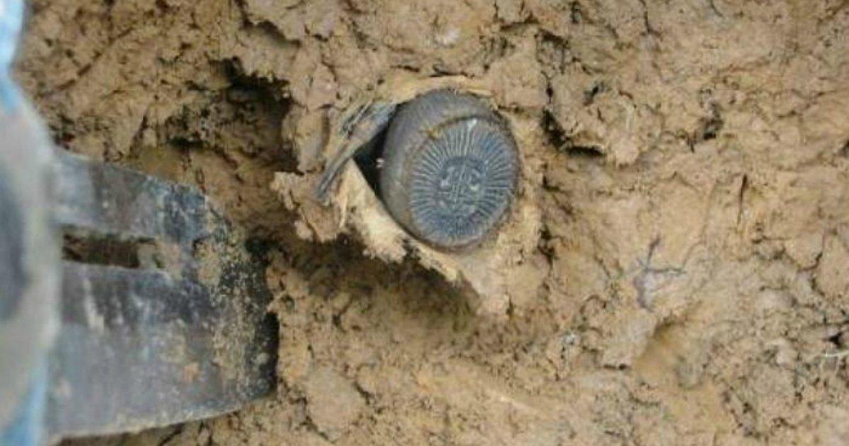 54wz8vsnqo7403974e95 - '고대 동전'인 줄 알고 주웠는데…알고보니 '거미'?