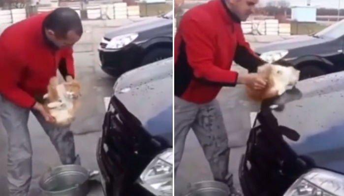 6 53 - '새끼 고양이'를 차량 청소용 스펀지로 사용한 남성 (영상)