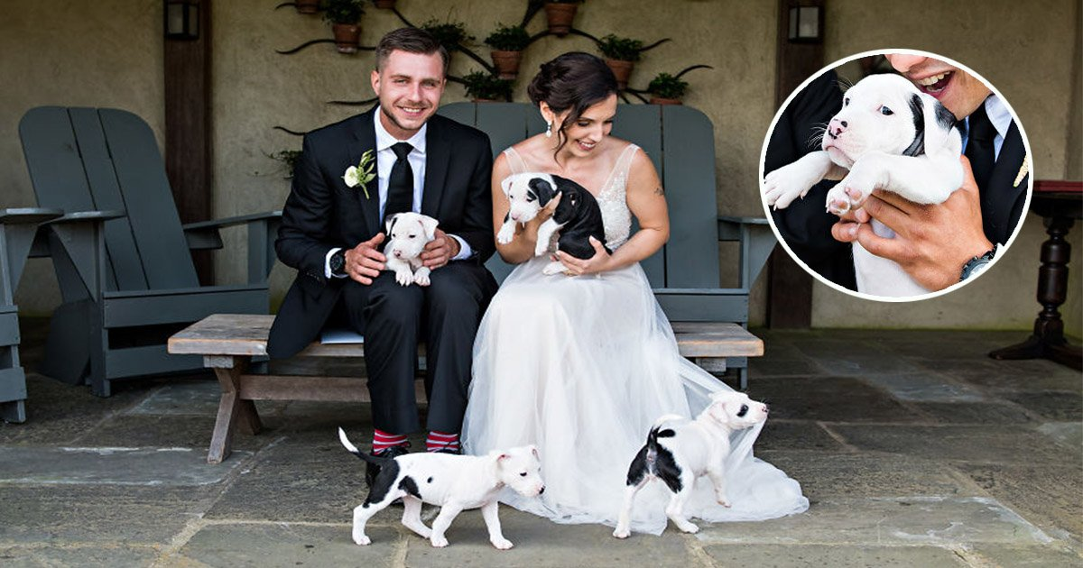 6ec8db8eb84ac 1 - This Couple Had Rescue Puppies Instead Of Bouquets In Their Wedding Photos