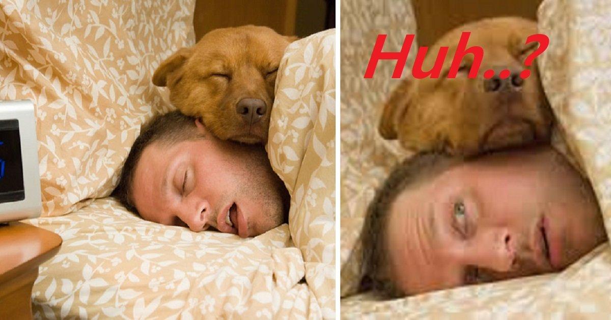 6hfgmj - La façon dont vous dormez avec votre chien raconte tout de votre relation
