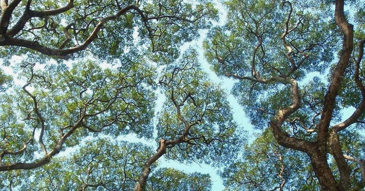 "7 144.jpg?resize=1200,630 - ""모두 함께 자라자"" 서로를 배려하며 성장한 나무들"