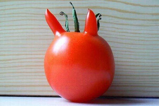 8 1 - 재밌는 모양의 야채 (사진16)